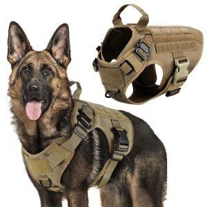 Dog Tactical Gear